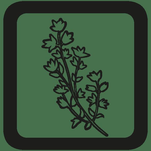 BOTANIQUE - moyen